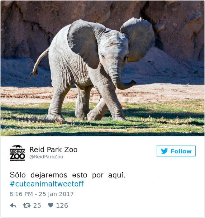un elefante bebé
