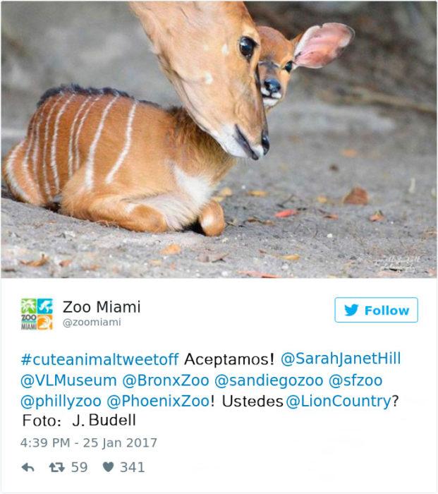 bambi de la vida real