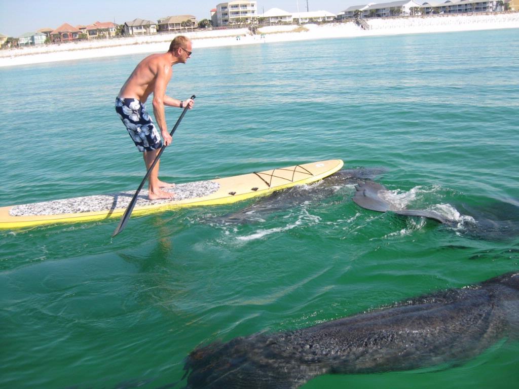 Pelican Island New Smyrna Beach Florida