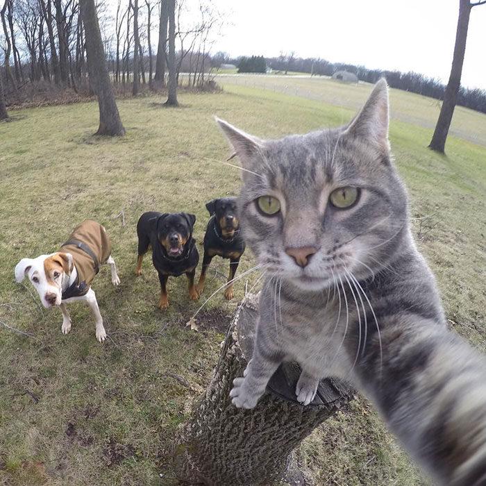 selfie gato y perros