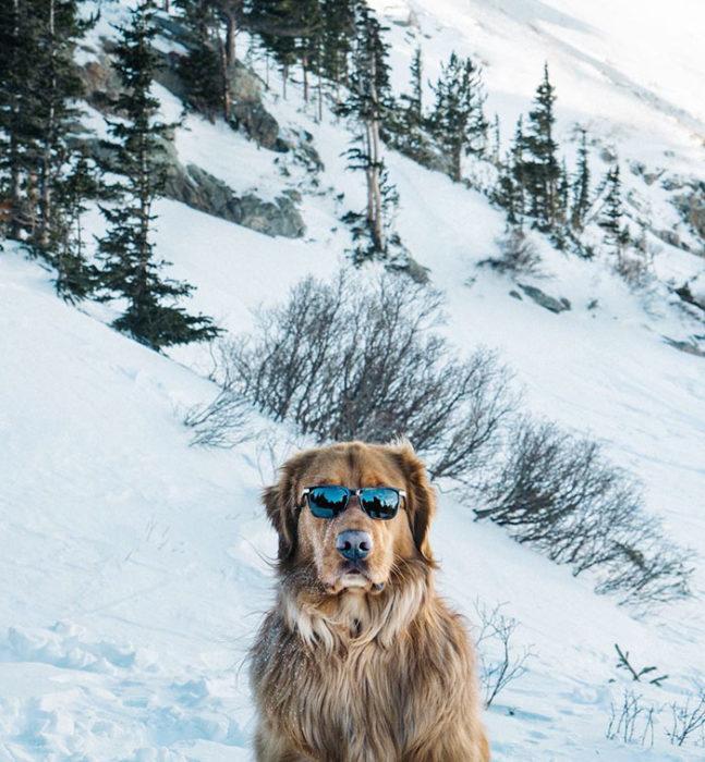perro con lentes oscuros en la nieve