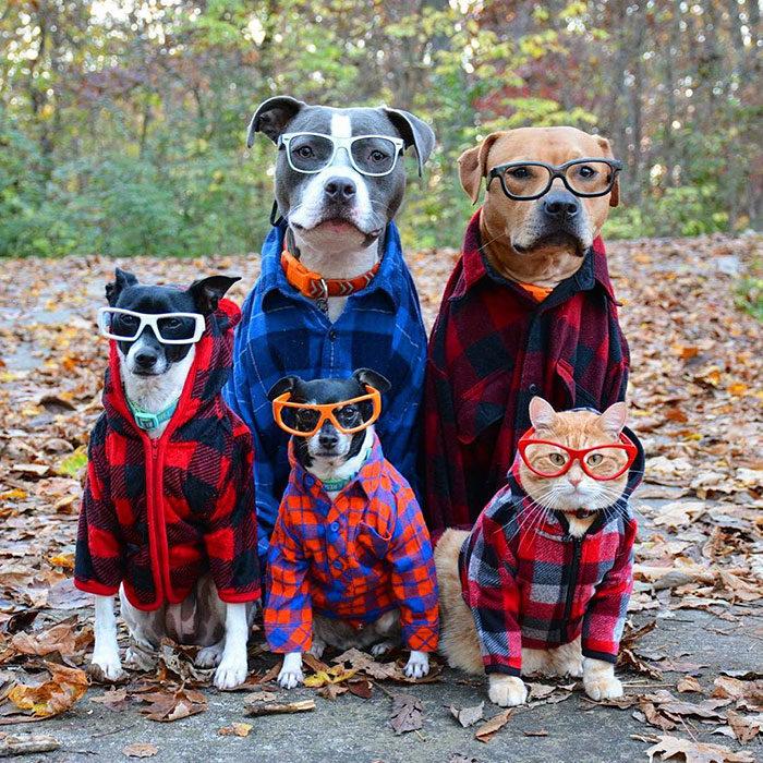 perros y gatos geeks