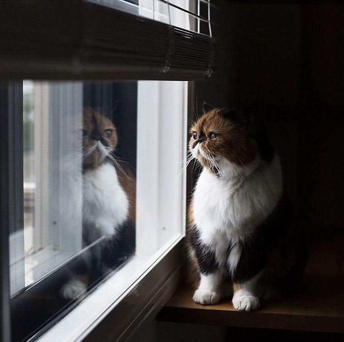 gato viendo a la ventana