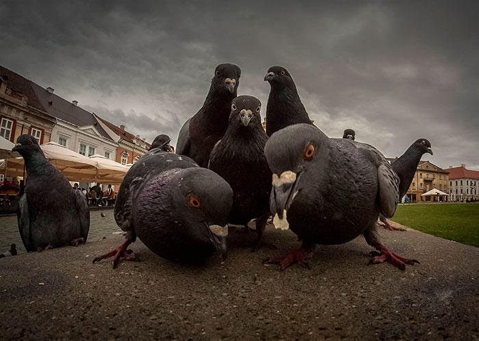 palomas negras