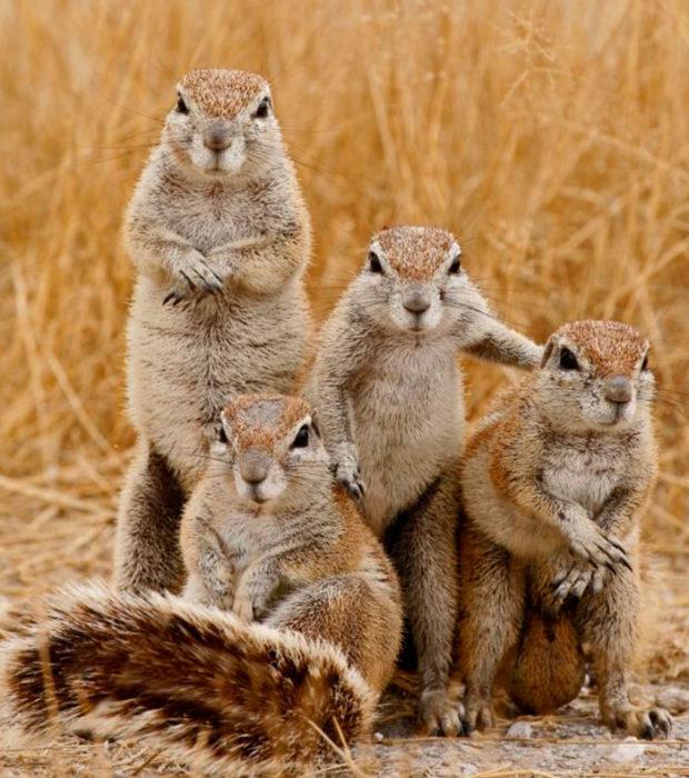 4 ardillas