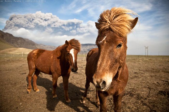 dos caballos en un día de aire