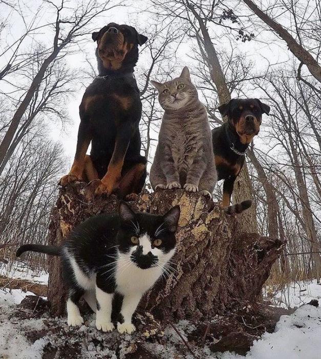 dos gatos y dos perros
