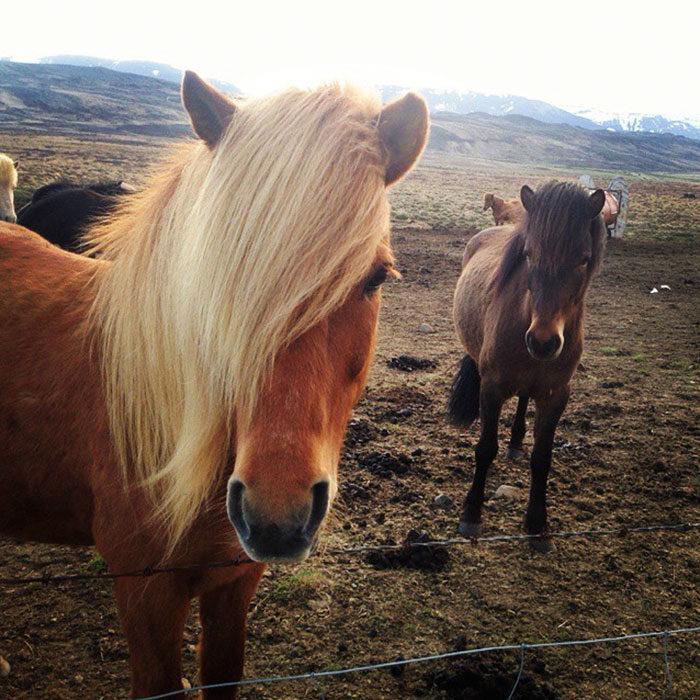 dos caballos bien peinados