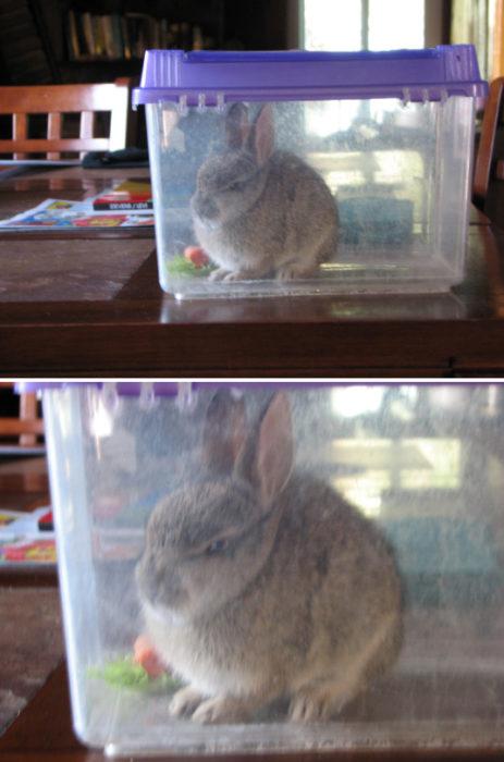 conejo enojado
