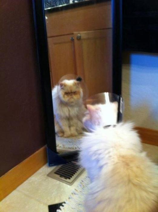 gato fastidiado