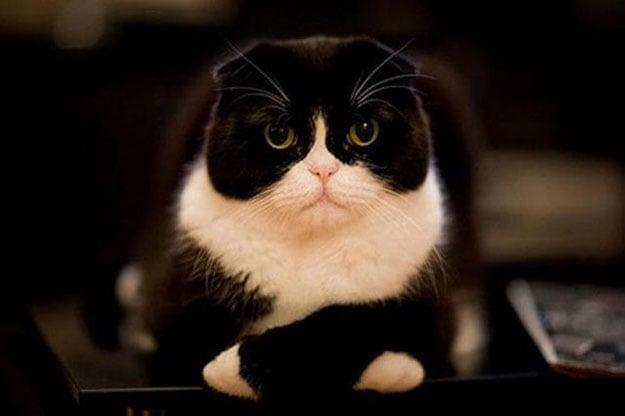 gato te mira con cara de decepción