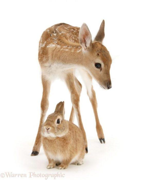 Animales mismo pelo distinta especie 4