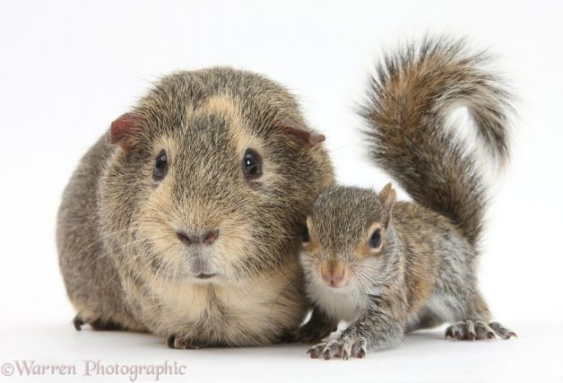 Animales mismo pelo distinta especie 5