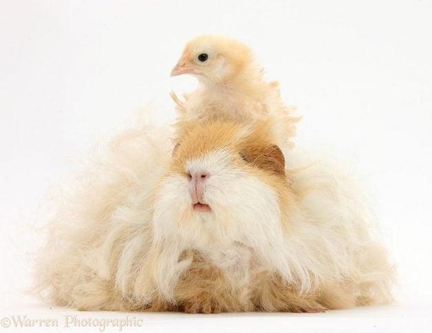 Animales mismo pelo distinta especie 7