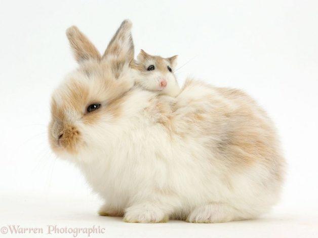 Animales mismo pelo distinta especie 9