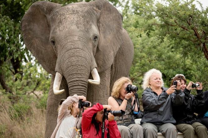 foto personas tomando foto y atrás un elefante