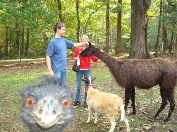 foto personas en zoológico y una avestruz se mete