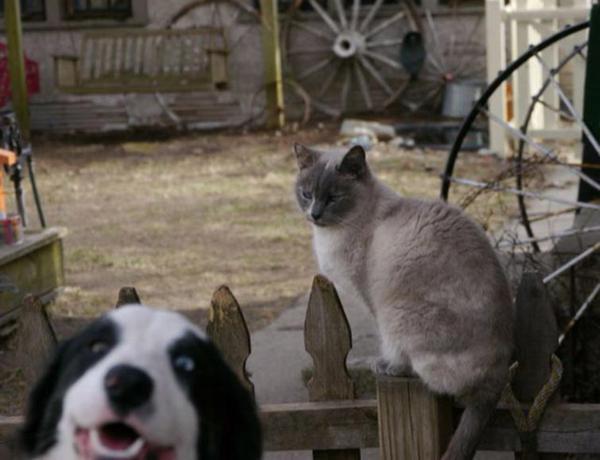 foto de gato y el perro se mete