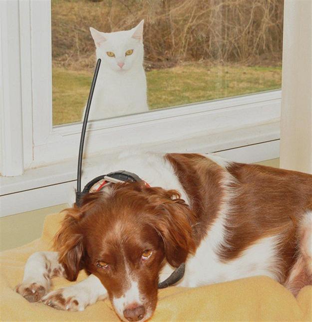 foto de perro y gato atrás