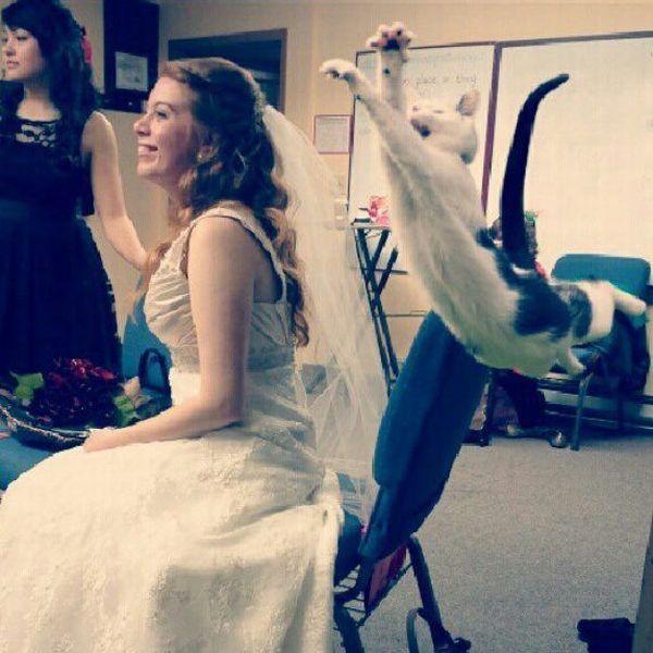 foto novia y un gato salta a punto de tomarle su velo