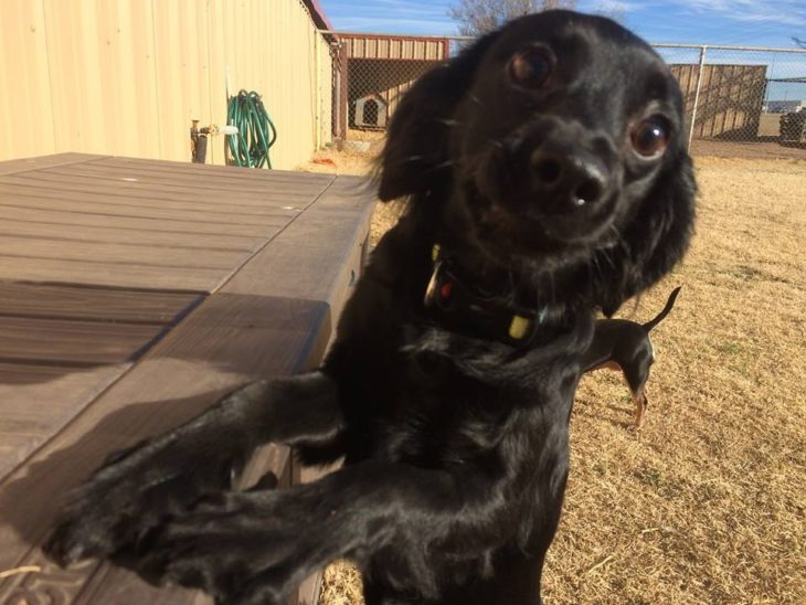 perro cara de cerca negro