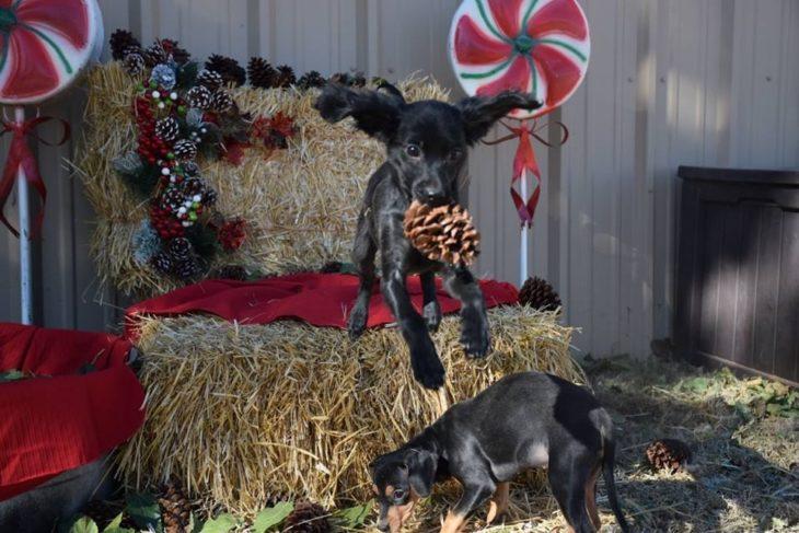 perro saltando decoración navideña