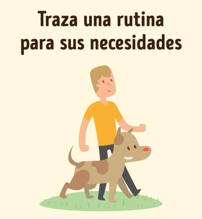 Entrenamiento perros rutina hacer necesidades