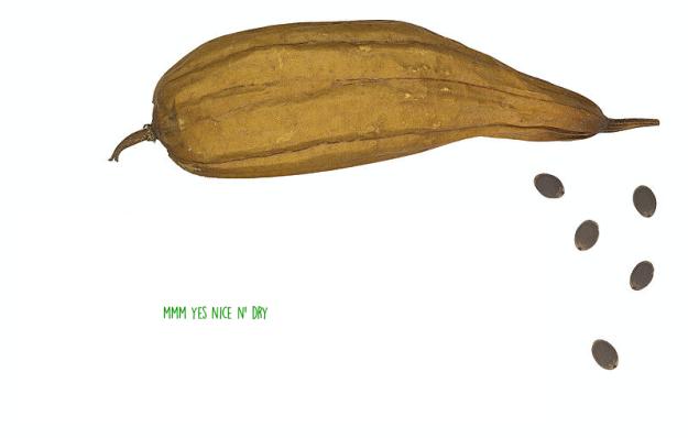 calabaza luffus seca