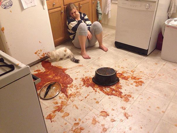 gato cocina sucia