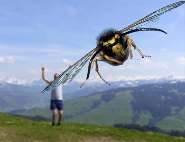 Fotografías tomadas en el momento exacto abeja gigante