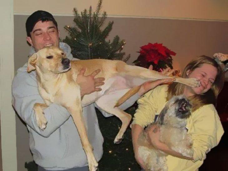 patada perro Fotografías tomadas en el momento exacto