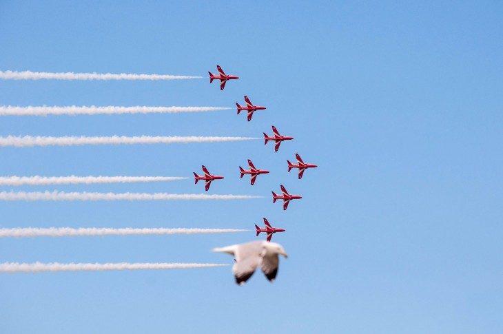gaviota aviones Fotografías tomadas en el momento exacto