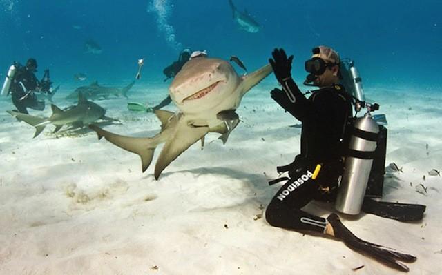 Fotografías tomadas en el momento exacto tiburón y buzo chócala dame cinco