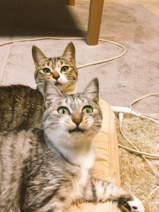 Gatitos y calentador 1