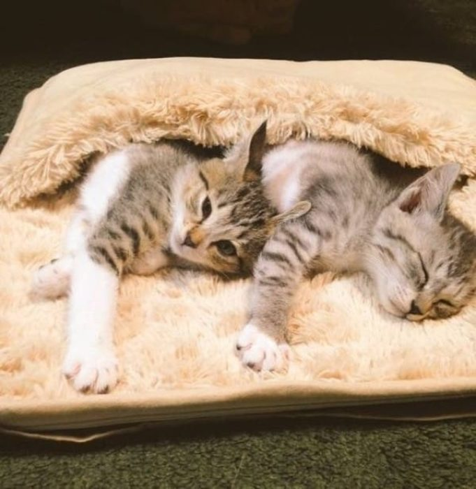 Gatitos y calentador 3
