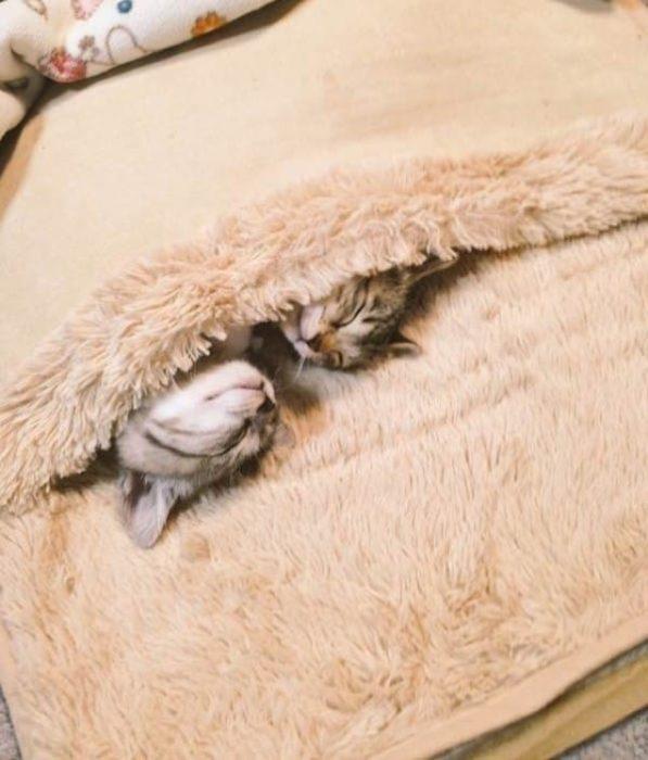 Gatitos y calentador 4