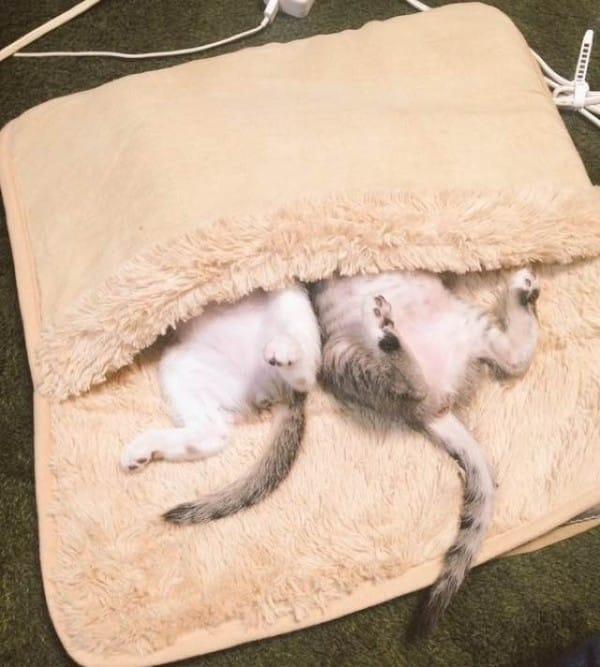 Gatitos y calentador 6