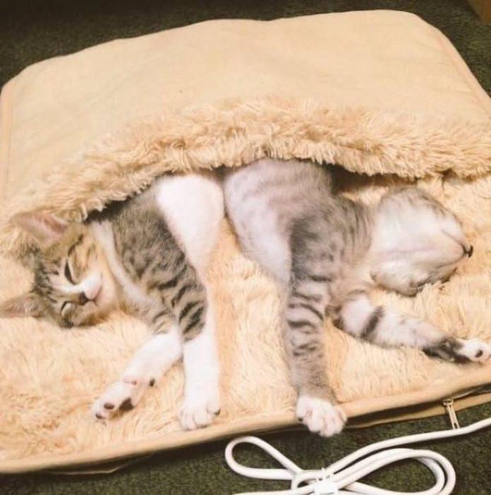 Gatitos y calentador 7