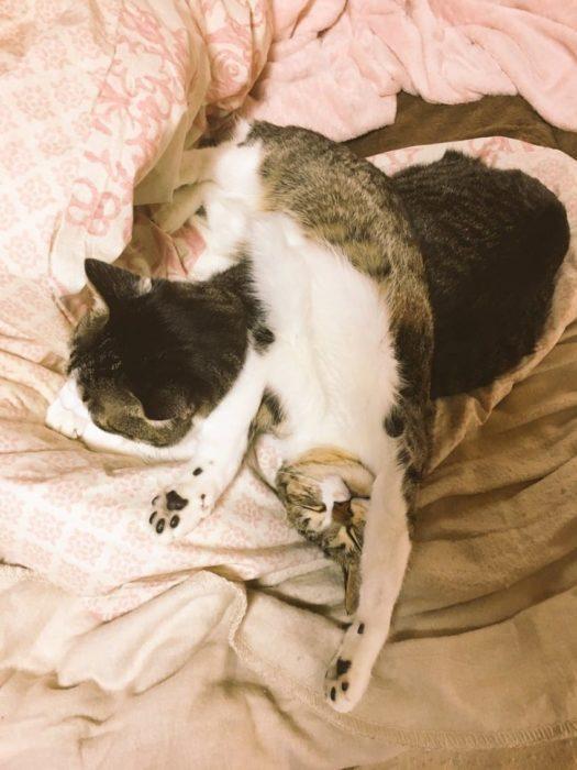 Gatitos y calentador 8