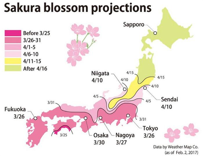 Árboles cerezos rosa Japón
