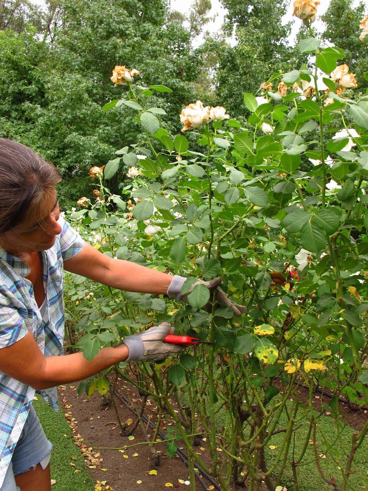 Te decimos el secreto mejor escondido para un jard n hermoso for Jardin frances