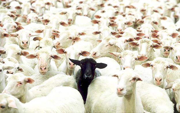 La oveja negra de la familia