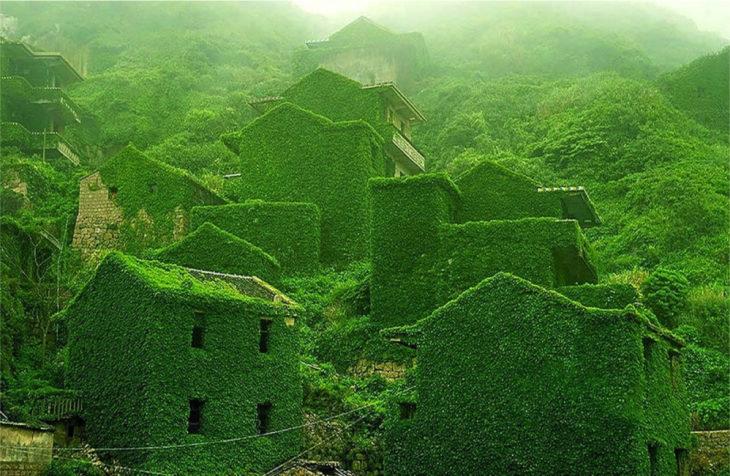 casas completamente verdes por hierbas