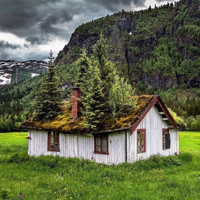 casa en medio del bosque con árboles adentro