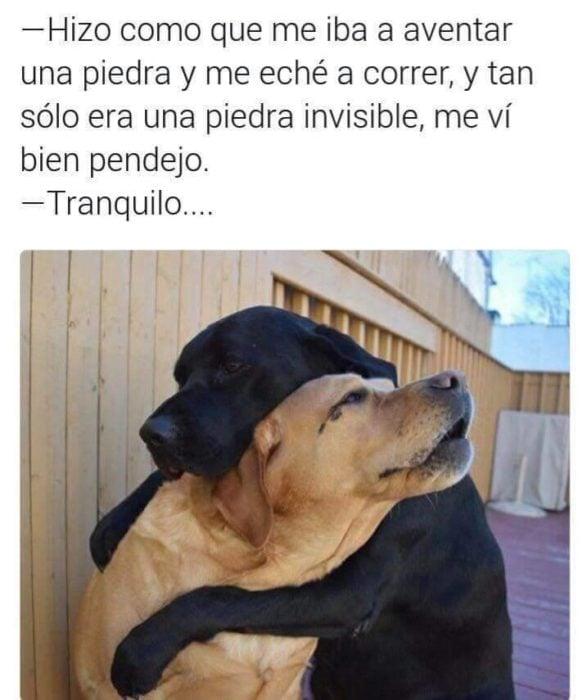 Memes simples perros llorando abrazados
