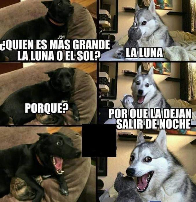Memes simples luna husky meme