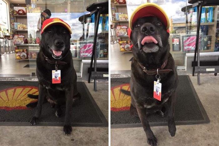Perrito trabajando en una gasolinera con uniforme