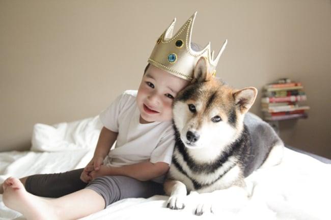 rey niño perro cama