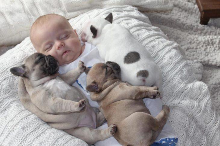 Bebé y dos cachorros bull dog dormidos