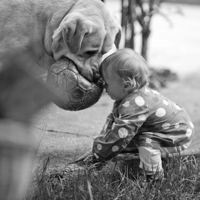 fútbol perrito caricia blanco y negro bebé